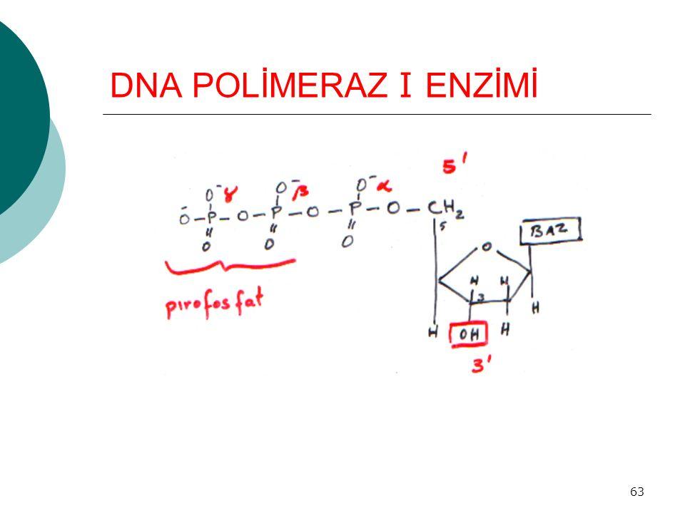 63 DNA POLİMERAZ I ENZİMİ