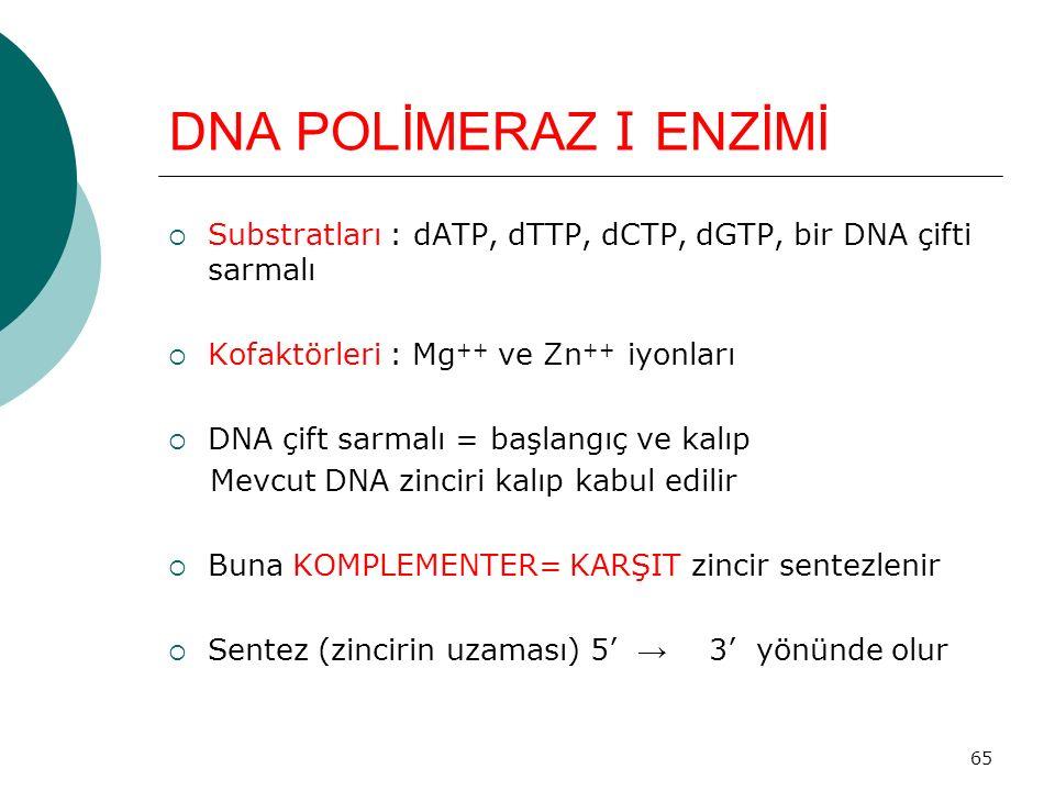 65 DNA POLİMERAZ I ENZİMİ  Substratları : dATP, dTTP, dCTP, dGTP, bir DNA çifti sarmalı  Kofaktörleri : Mg ++ ve Zn ++ iyonları  DNA çift sarmalı =