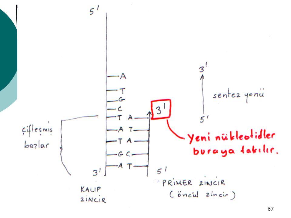 68 REPLİKASYON OLAYI  1)Başlama noktasının tanınması(origin)  2)Ebeveyn sarmalın dönerek açılması  3)Yavru komplementer zincirlerin oluşumu  4)Zincirin uzaması  5)Zincirin sarmal şeklini alması  6)Replikasyonun sonlanması  20 veya  enzim = DNA replikaz sisitemi (REPLİZOM)