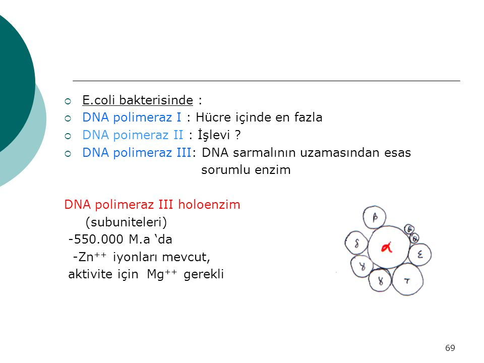 69  E.coli bakterisinde :  DNA polimeraz I : Hücre içinde en fazla  DNA poimeraz II : İşlevi ?  DNA polimeraz III: DNA sarmalının uzamasından esas