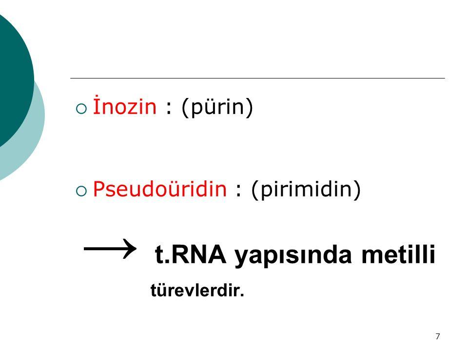7  İnozin : (pürin)  Pseudoüridin : (pirimidin) → t.RNA yapısında metilli türevlerdir.