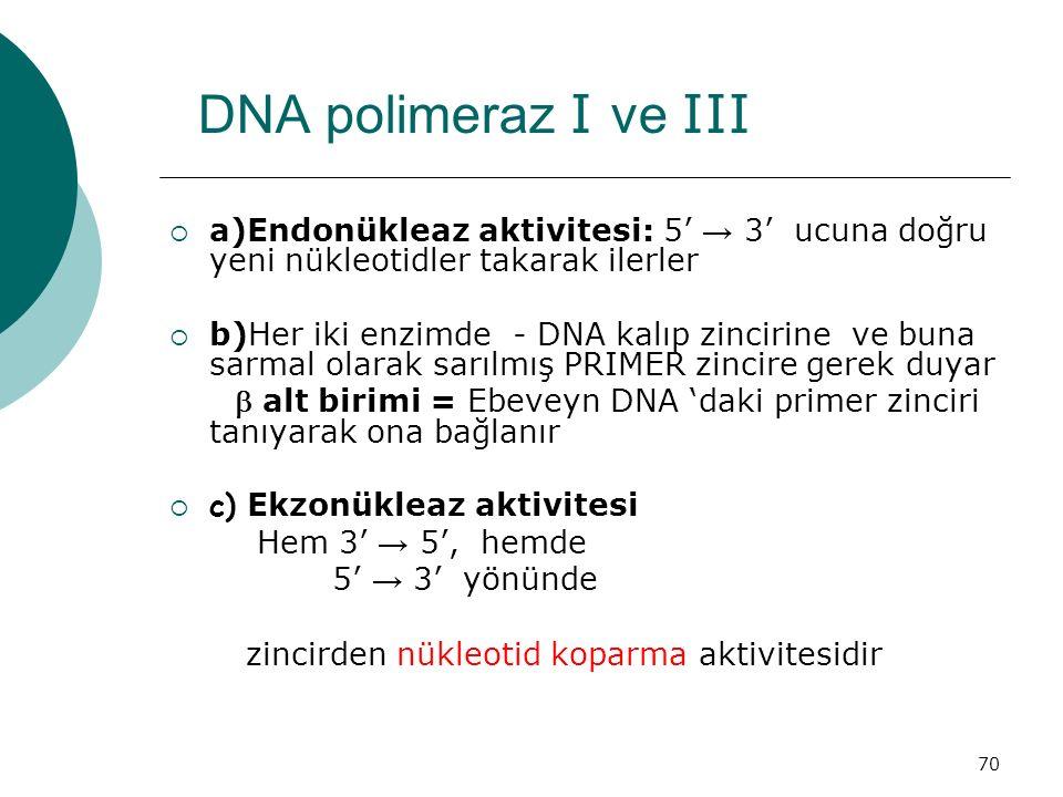 70 DNA polimeraz I ve III  a)Endonükleaz aktivitesi: 5' → 3' ucuna doğru yeni nükleotidler takarak ilerler  b)Her iki enzimde - DNA kalıp zincirine