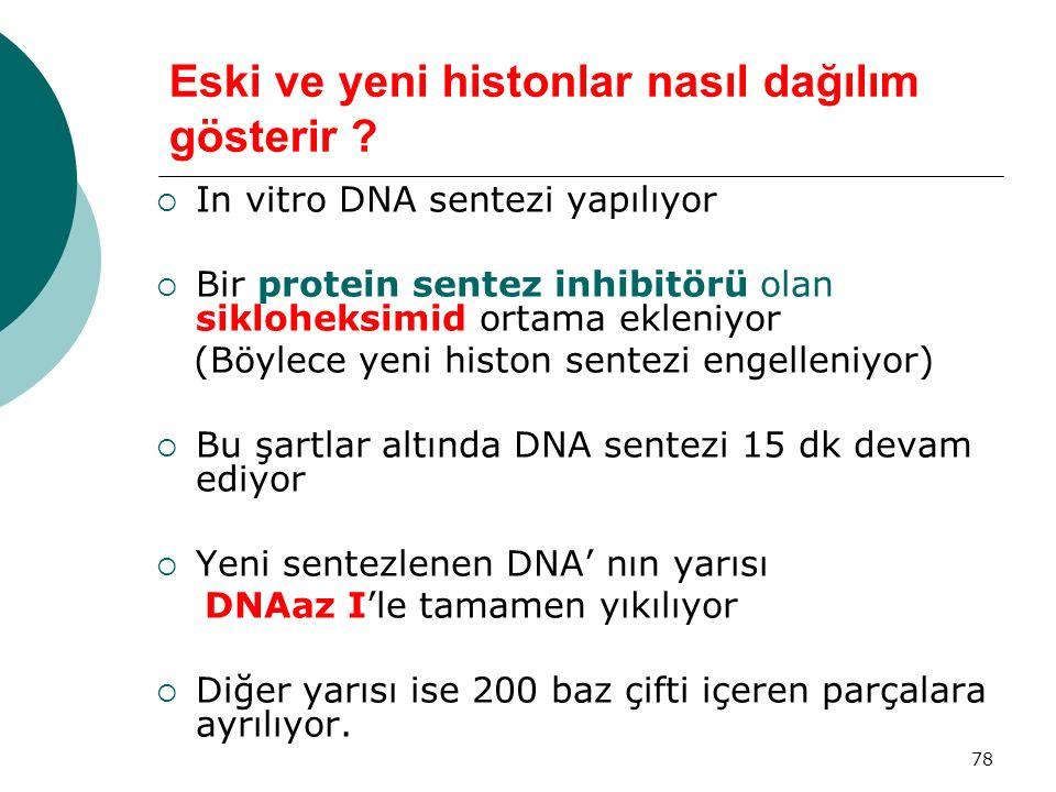 78 Eski ve yeni histonlar nasıl dağılım gösterir ?  In vitro DNA sentezi yapılıyor  Bir protein sentez inhibitörü olan sikloheksimid ortama ekleniyo
