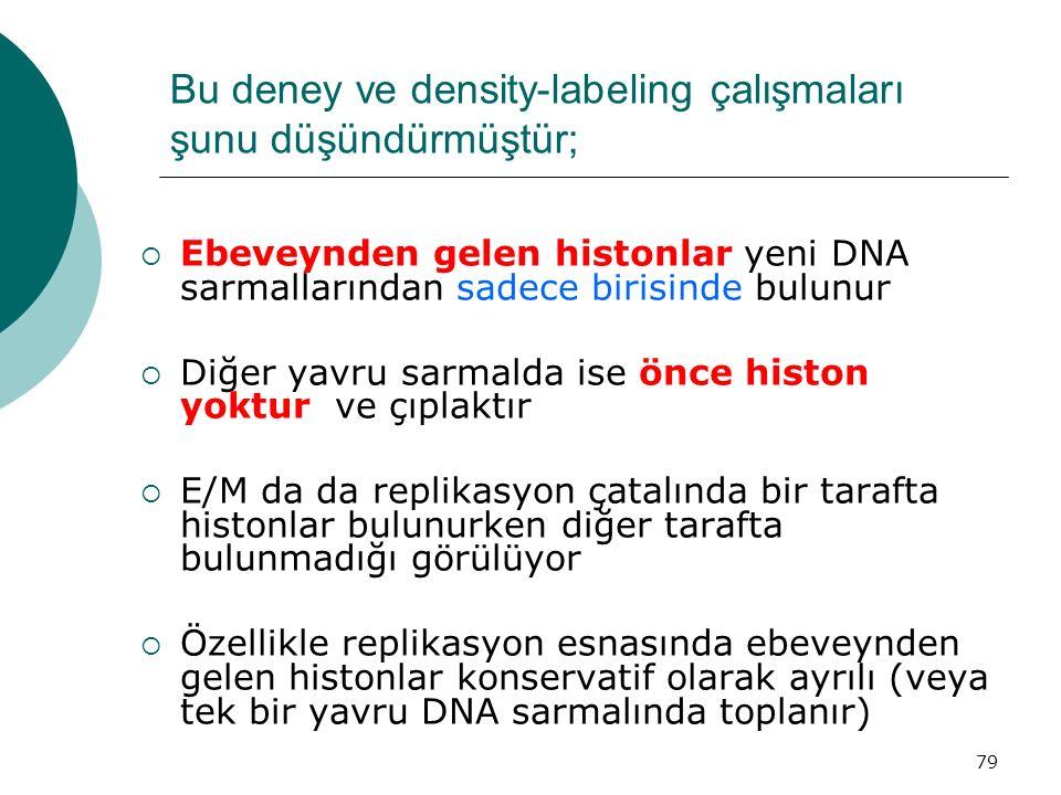 79 Bu deney ve density-labeling çalışmaları şunu düşündürmüştür;  Ebeveynden gelen histonlar yeni DNA sarmallarından sadece birisinde bulunur  Diğer