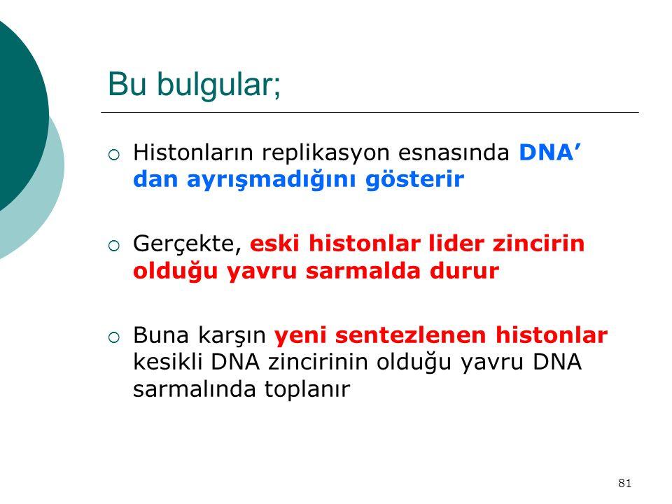81 Bu bulgular;  Histonların replikasyon esnasında DNA' dan ayrışmadığını gösterir  Gerçekte, eski histonlar lider zincirin olduğu yavru sarmalda du