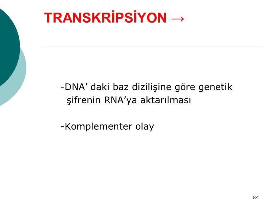 84 TRANSKRİPSİYON → -DNA' daki baz dizilişine göre genetik şifrenin RNA'ya aktarılması -Komplementer olay