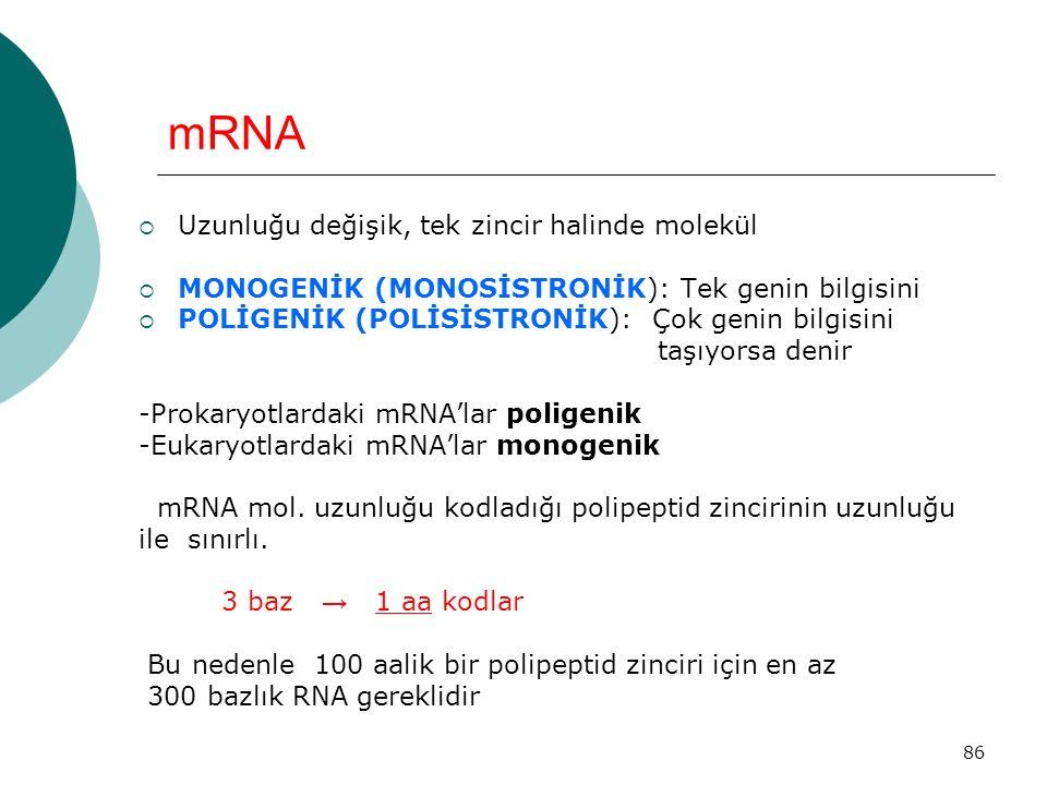 86 mRNA  Uzunluğu değişik, tek zincir halinde molekül  MONOGENİK (MONOSİSTRONİK): Tek genin bilgisini  POLİGENİK (POLİSİSTRONİK): Çok genin bilgisi