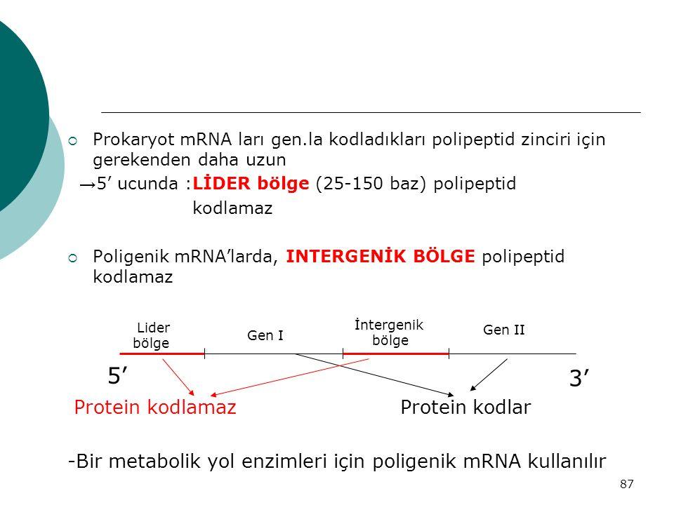 87  Prokaryot mRNA ları gen.la kodladıkları polipeptid zinciri için gerekenden daha uzun → 5' ucunda :LİDER bölge (25-150 baz) polipeptid kodlamaz 
