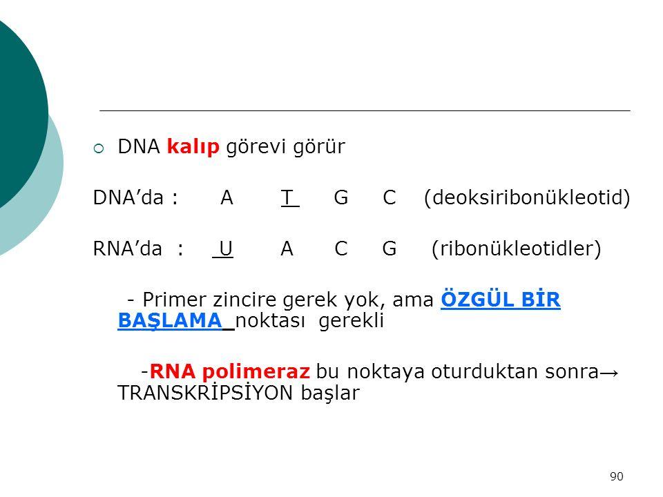 90  DNA kalıp görevi görür DNA'da : A T G C (deoksiribonükleotid) RNA'da : U A C G (ribonükleotidler) - Primer zincire gerek yok, ama ÖZGÜL BİR BAŞLA
