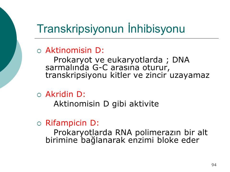 94 Transkripsiyonun İnhibisyonu  Aktinomisin D: Prokaryot ve eukaryotlarda ; DNA sarmalında G-C arasına oturur, transkripsiyonu kitler ve zincir uzay