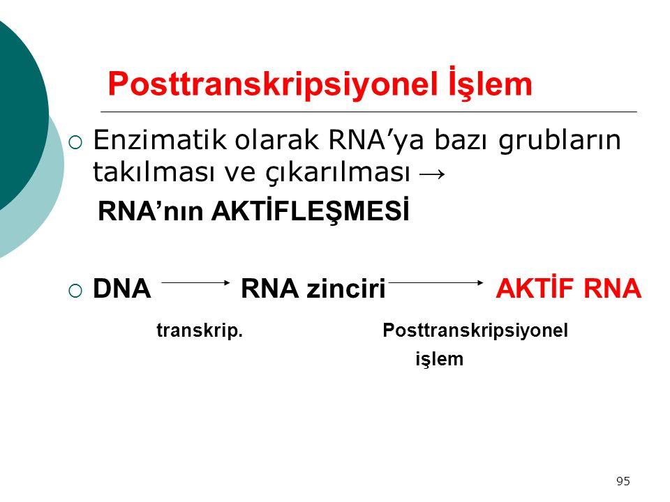 95 Posttranskripsiyonel İşlem  Enzimatik olarak RNA'ya bazı grubların takılması ve çıkarılması → RNA'nın AKTİFLEŞMESİ  DNA RNA zinciri AKTİF RNA tra