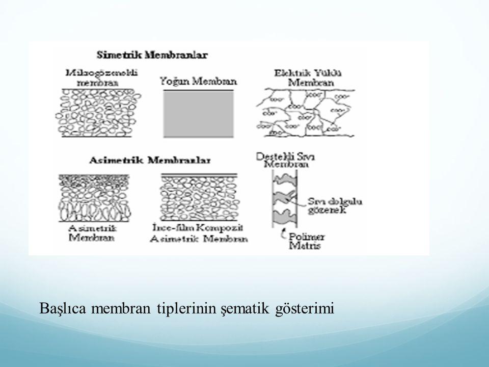Başlıca membran tiplerinin şematik gösterimi