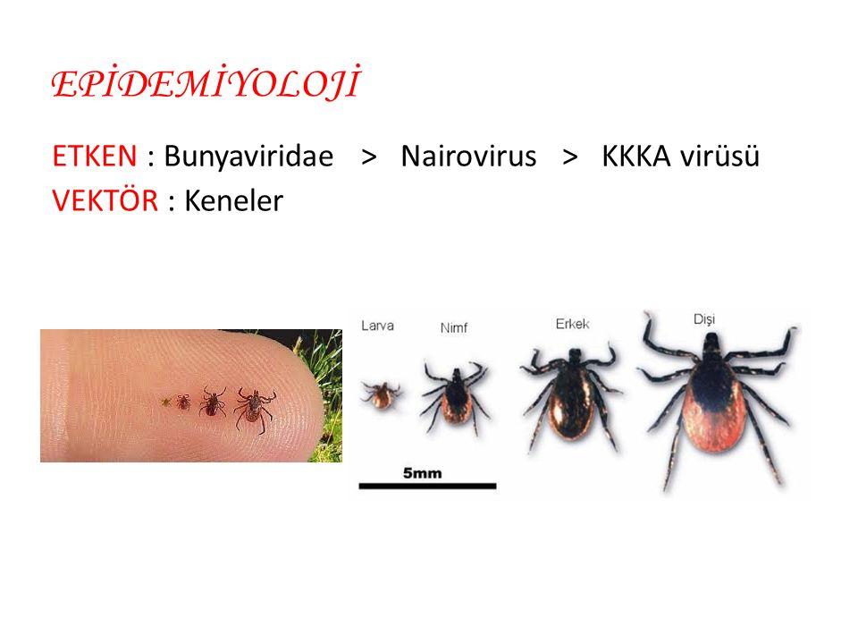 EPİDEMİYOLOJİ ETKEN : Bunyaviridae > Nairovirus > KKKA virüsü VEKTÖR : Keneler
