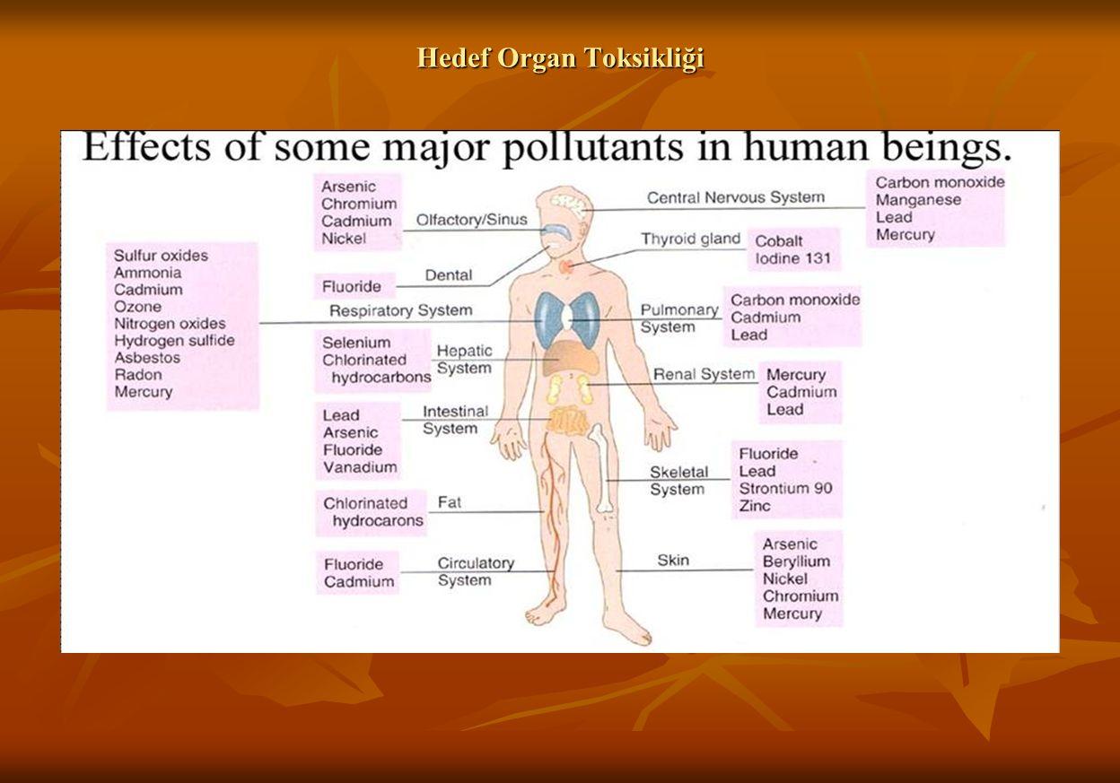 Hedef Organ Toksikliği