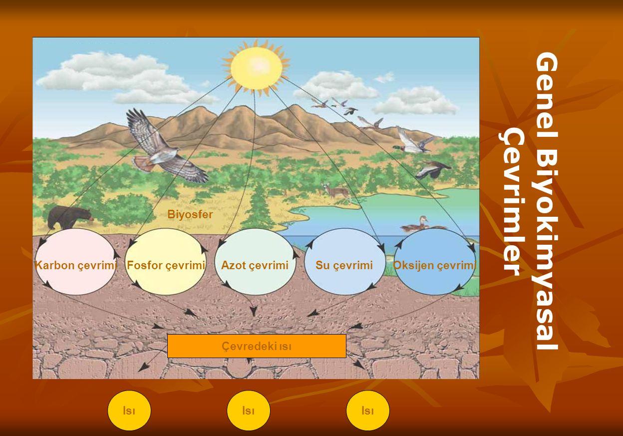 Biyosfer Karbon çevrimiFosfor çevrimiAzot çevrimiSu çevrimiOksijen çevrimi Çevredeki ısı Isı Genel Biyokimyasal Çevrimler