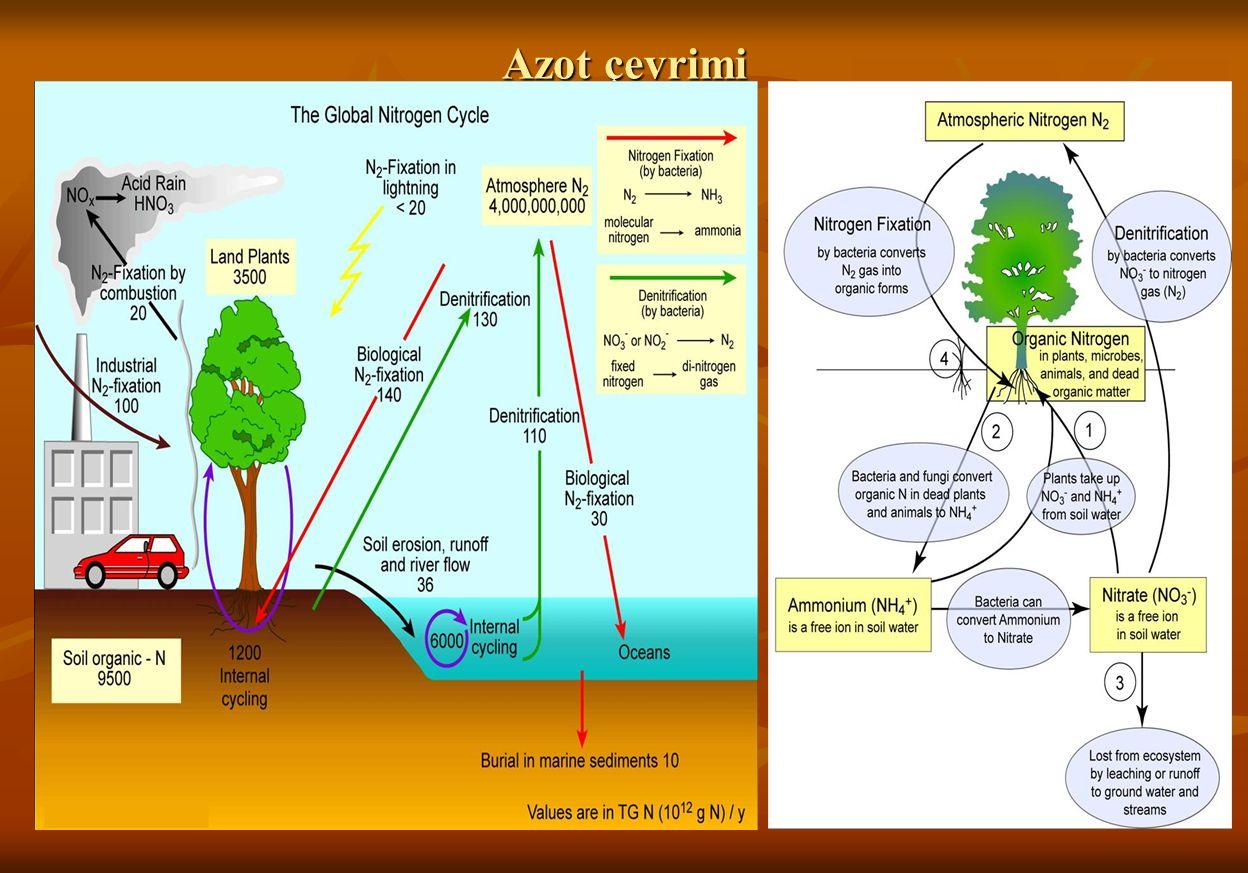 Toprak Kirleticileri Toprak su ve havaya oranla dış etkenlere karşı tamponlama gücü daha yüksektir.
