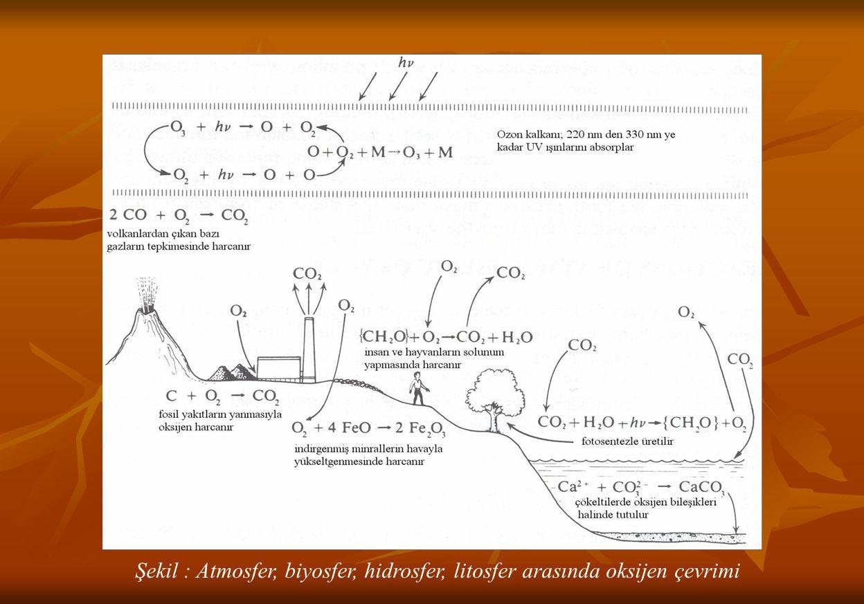Şekil : Atmosfer, biyosfer, hidrosfer, litosfer arasında oksijen çevrimi