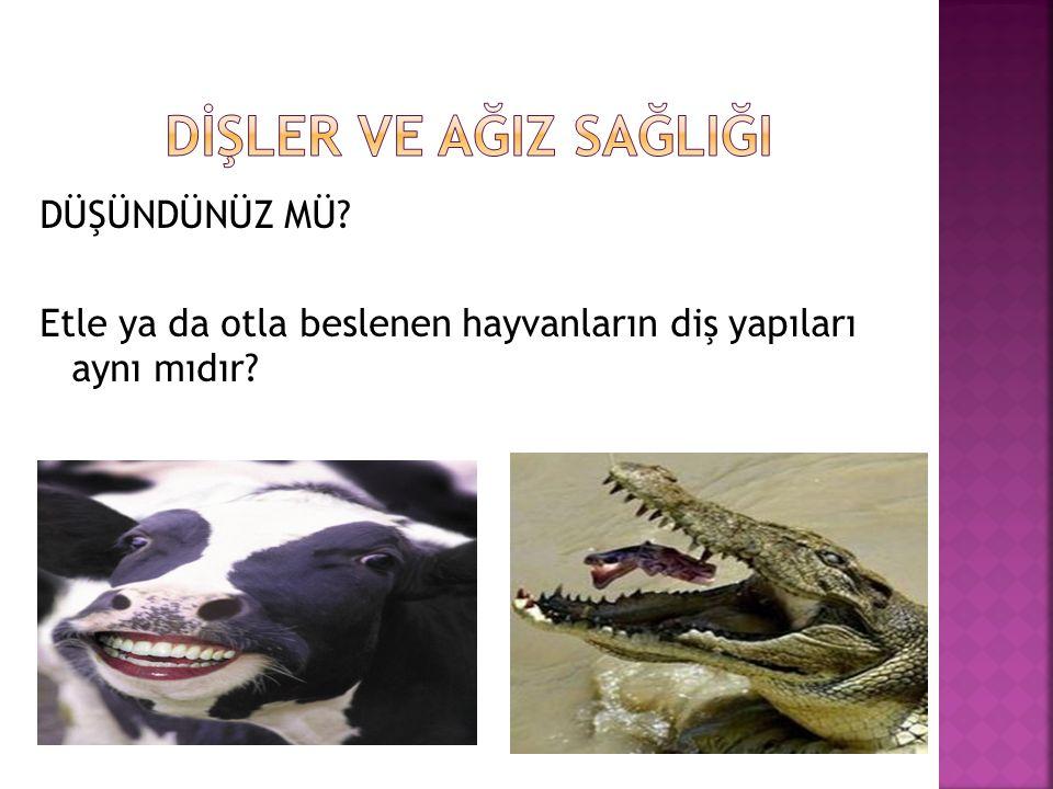 DÜŞÜNDÜNÜZ MÜ Etle ya da otla beslenen hayvanların diş yapıları aynı mıdır