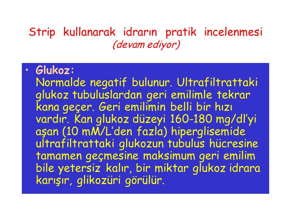Strip kullanarak idrarın pratik incelenmesi (devam ediyor) Glukoz: Normalde negatif bulunur. Ultrafiltrattaki glukoz tubuluslardan geri emilimle tekra