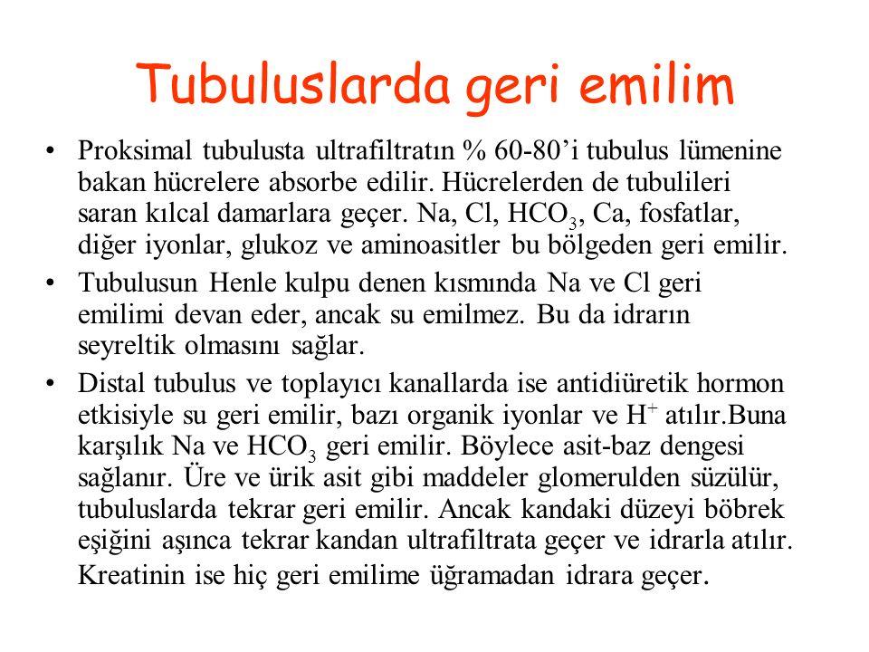 Tubuluslarda geri emilim Proksimal tubulusta ultrafiltratın % 60-80'i tubulus lümenine bakan hücrelere absorbe edilir. Hücrelerden de tubulileri saran