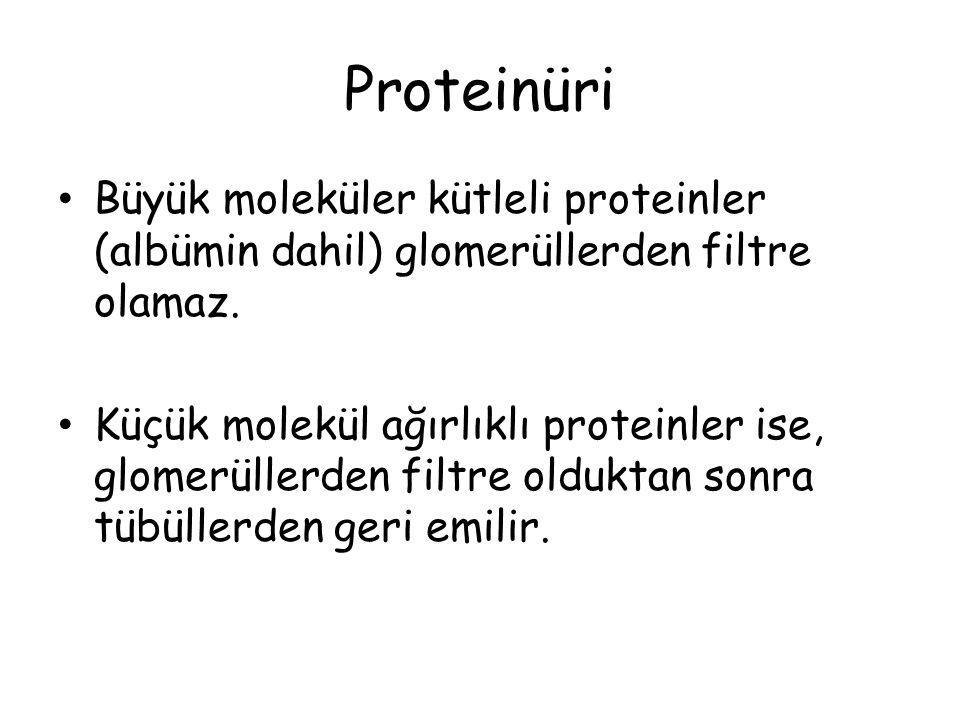 Proteinüri Büyük moleküler kütleli proteinler (albümin dahil) glomerüllerden filtre olamaz. Küçük molekül ağırlıklı proteinler ise, glomerüllerden fil