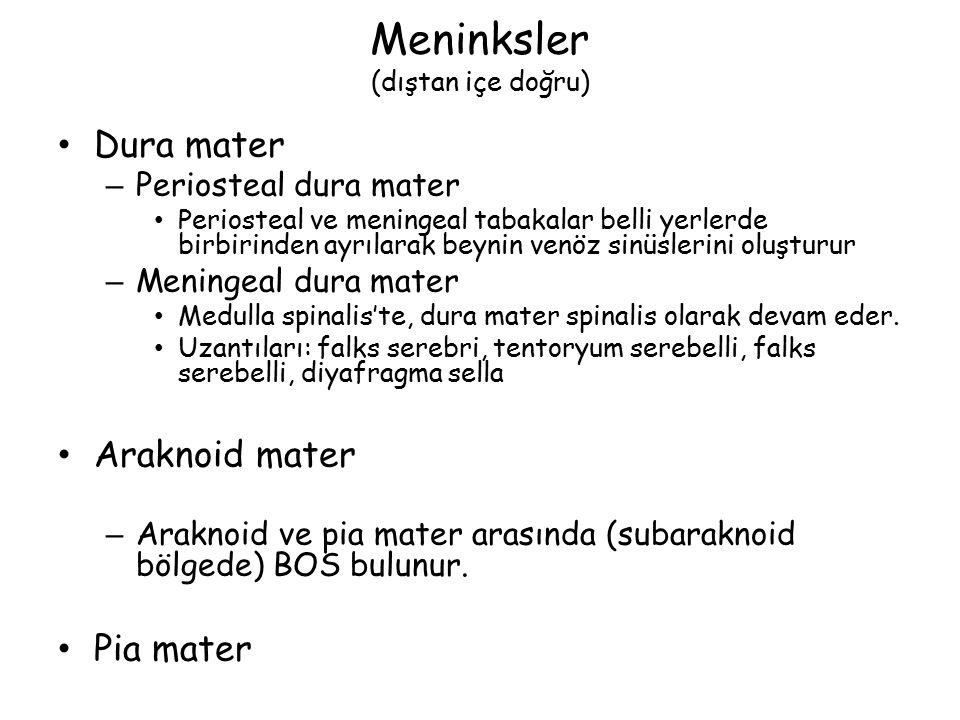 Meninksler (dıştan içe doğru) Dura mater – Periosteal dura mater Periosteal ve meningeal tabakalar belli yerlerde birbirinden ayrılarak beynin venöz sinüslerini oluşturur – Meningeal dura mater Medulla spinalis'te, dura mater spinalis olarak devam eder.