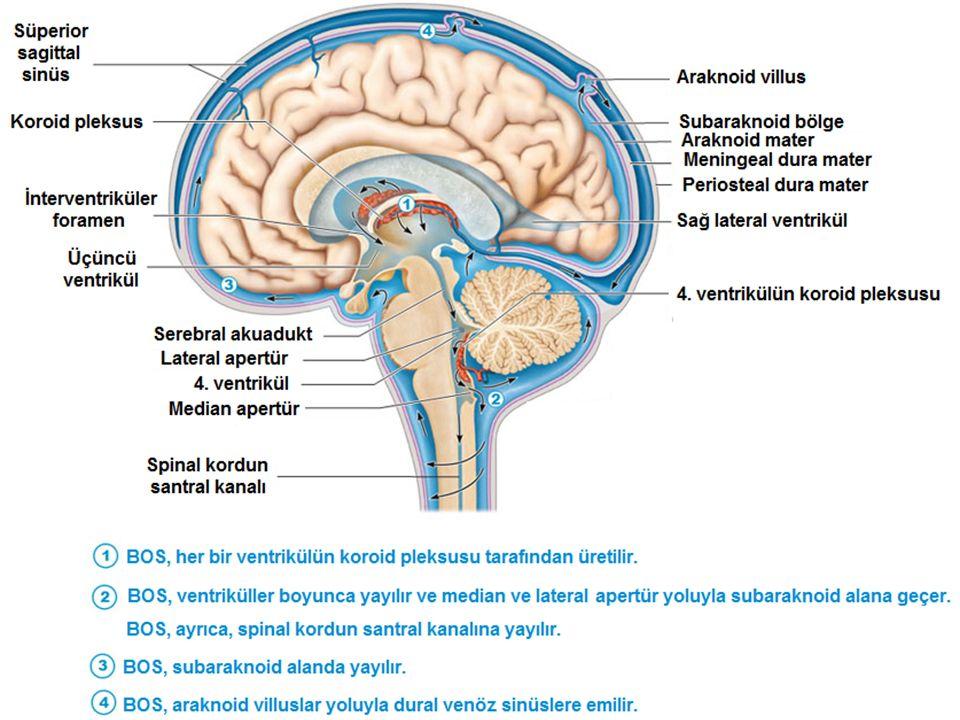 Ventriküler Sistem Beyin ve beyin sapı içinde yer alan, birbirleriyle bağlantılı ve içleri BOS ile dolu olan boşluklara ventrikül adı verilir.