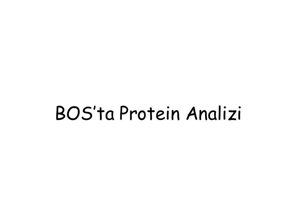 BOS'ta Protein Analizi