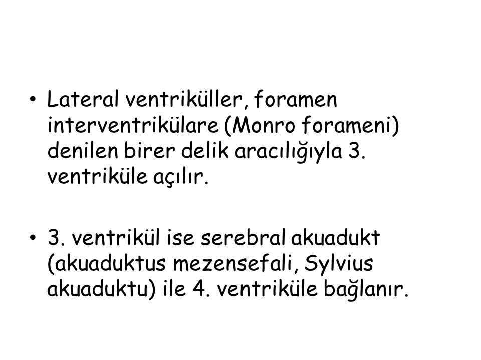 Lateral ventriküller, foramen interventrikülare (Monro forameni) denilen birer delik aracılığıyla 3.
