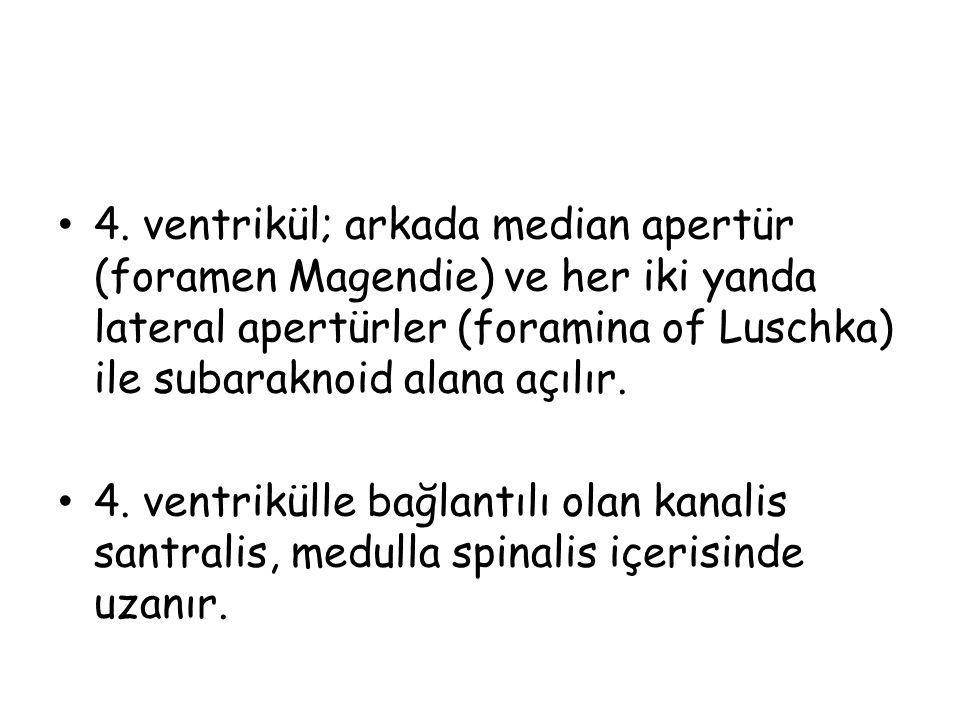 4. ventrikül; arkada median apertür (foramen Magendie) ve her iki yanda lateral apertürler (foramina of Luschka) ile subaraknoid alana açılır. 4. vent