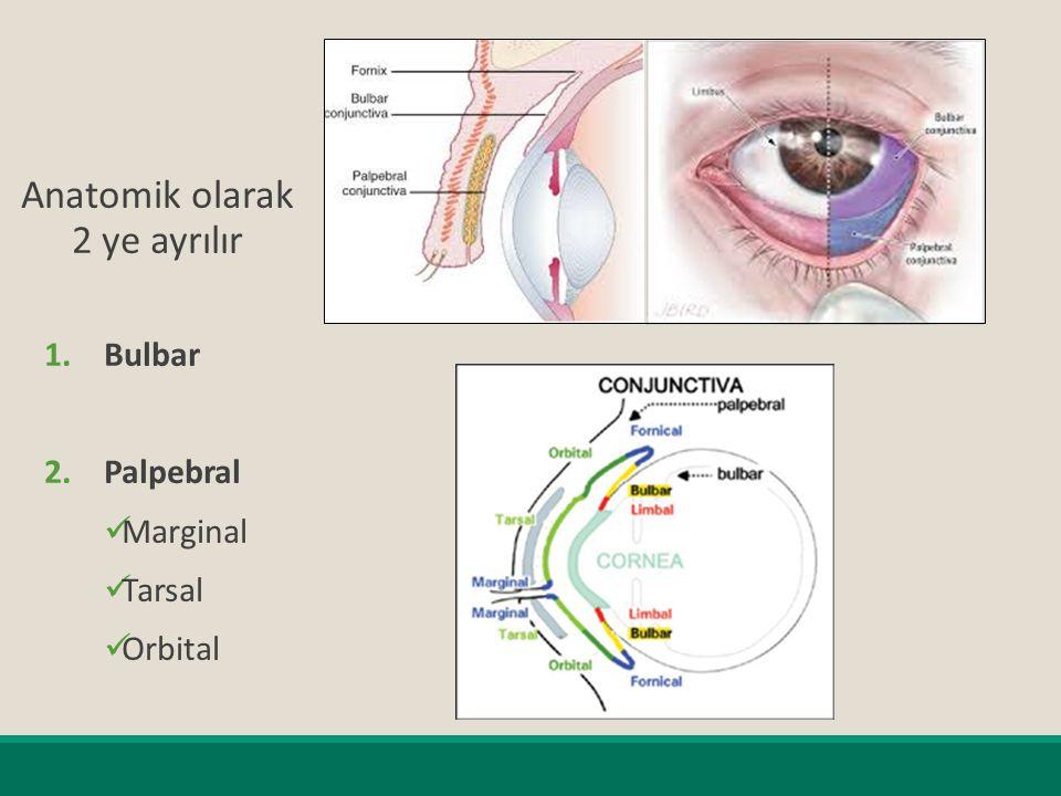 Konjonktivanın Görevleri  Mukus ve gözyaşının büyük bir kısmını salgılayarak göz küresine lubrikasyon sağlar.
