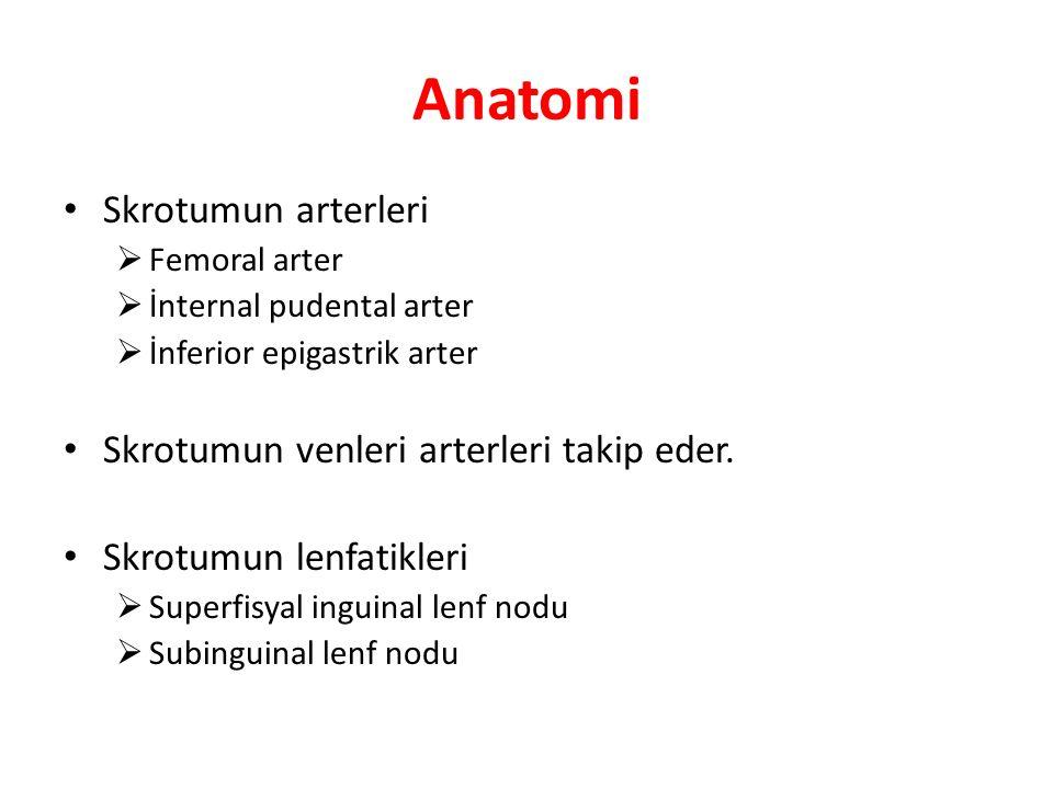 Anatomi Skrotumun arterleri  Femoral arter  İnternal pudental arter  İnferior epigastrik arter Skrotumun venleri arterleri takip eder. Skrotumun le