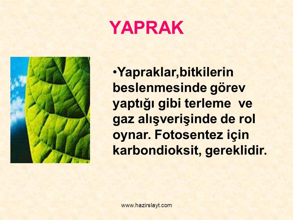 www.hazirslayt.com YAPRAK Yapraklar,bitkilerin beslenmesinde görev yaptığı gibi terleme ve gaz alışverişinde de rol oynar. Fotosentez için karbondioks
