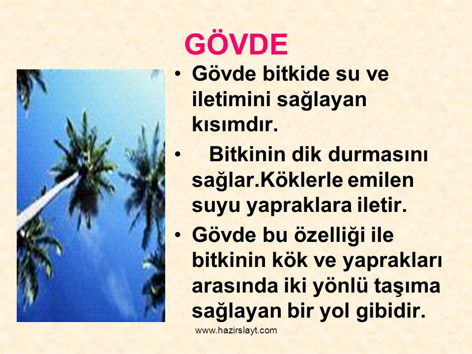 www.hazirslayt.com GÖVDE Gövde bitkide su ve iletimini sağlayan kısımdır. Bitkinin dik durmasını sağlar.Köklerle emilen suyu yapraklara iletir. Gövde