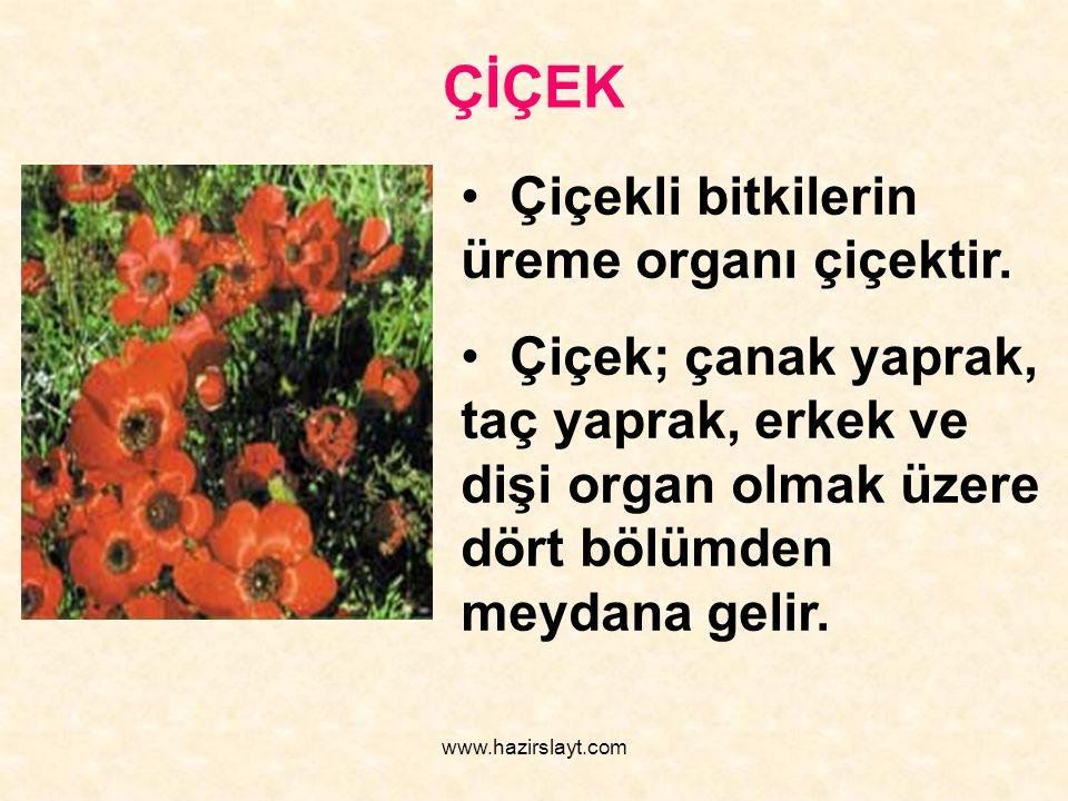 www.hazirslayt.com ÇİÇEK Çiçekli bitkilerin üreme organı çiçektir. Çiçek; çanak yaprak, taç yaprak, erkek ve dişi organ olmak üzere dört bölümden meyd