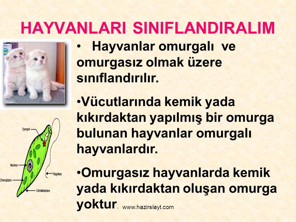 www.hazirslayt.com HAYVANLARI SINIFLANDIRALIM Hayvanlar omurgalı ve omurgasız olmak üzere sınıflandırılır. Vücutlarında kemik yada kıkırdaktan yapılmı