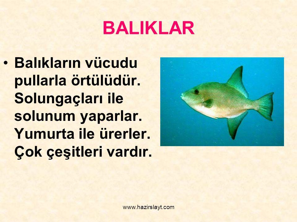 www.hazirslayt.com BALIKLAR Balıkların vücudu pullarla örtülüdür. Solungaçları ile solunum yaparlar. Yumurta ile ürerler. Çok çeşitleri vardır.