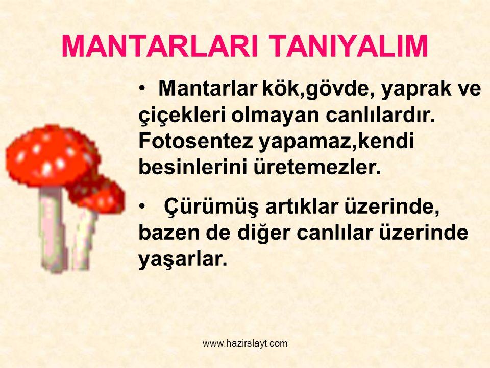 www.hazirslayt.com MANTARLARI TANIYALIM Mantarlar kök,gövde, yaprak ve çiçekleri olmayan canlılardır. Fotosentez yapamaz,kendi besinlerini üretemezler