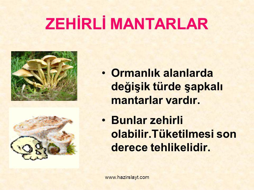www.hazirslayt.com ZEHİRLİ MANTARLAR Ormanlık alanlarda değişik türde şapkalı mantarlar vardır. Bunlar zehirli olabilir.Tüketilmesi son derece tehlike