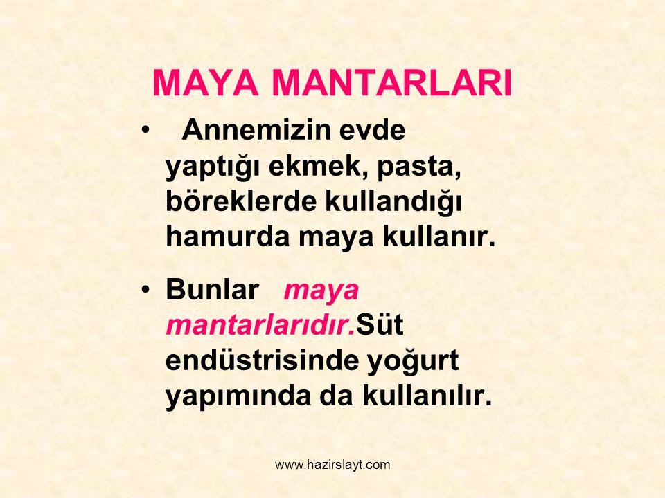 www.hazirslayt.com MAYA MANTARLARI Annemizin evde yaptığı ekmek, pasta, böreklerde kullandığı hamurda maya kullanır. Bunlar maya mantarlarıdır.Süt end