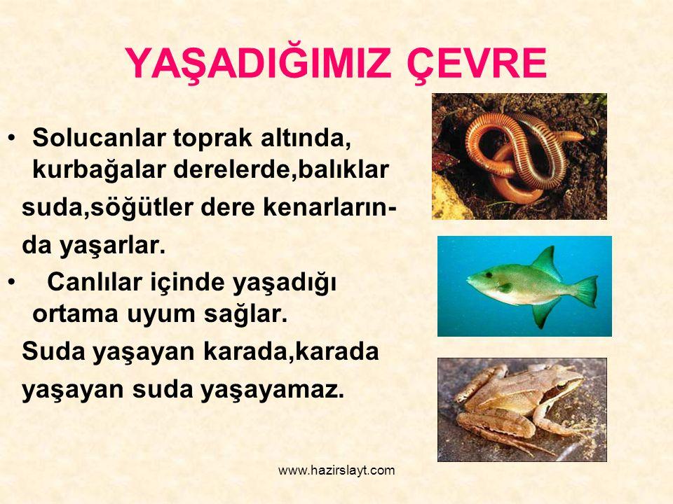 www.hazirslayt.com YAŞADIĞIMIZ ÇEVRE Solucanlar toprak altında, kurbağalar derelerde,balıklar suda,söğütler dere kenarların- da yaşarlar. Canlılar içi