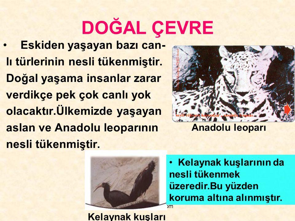 www.hazirslayt.com DOĞAL ÇEVRE Eskiden yaşayan bazı can- lı türlerinin nesli tükenmiştir. Doğal yaşama insanlar zarar verdikçe pek çok canlı yok olaca