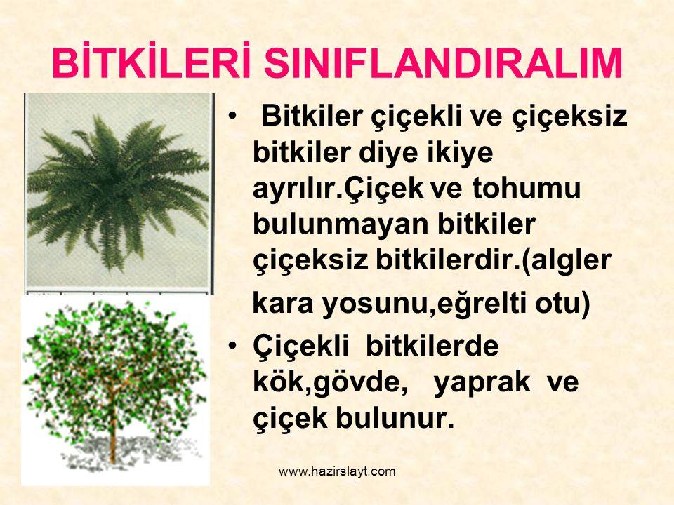 www.hazirslayt.com BİTKİLERİ SINIFLANDIRALIM Bitkiler çiçekli ve çiçeksiz bitkiler diye ikiye ayrılır.Çiçek ve tohumu bulunmayan bitkiler çiçeksiz bit
