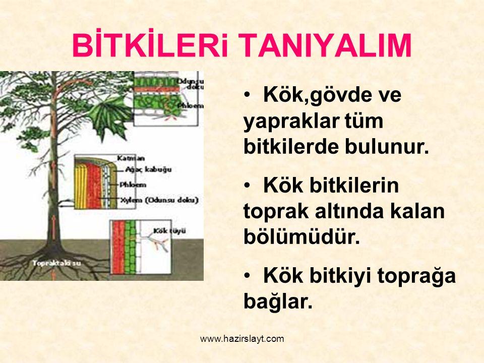 www.hazirslayt.com BİTKİLERi TANIYALIM Kök,gövde ve yapraklar tüm bitkilerde bulunur. Kök bitkilerin toprak altında kalan bölümüdür. Kök bitkiyi topra