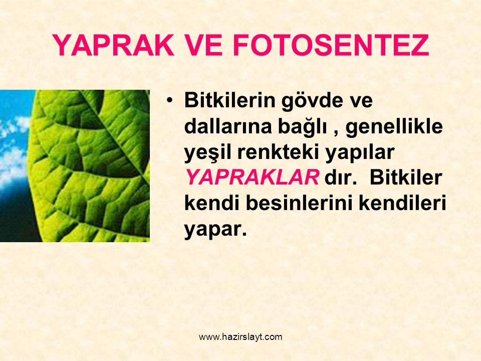 www.hazirslayt.com YAPRAK VE FOTOSENTEZ Bitkilerin gövde ve dallarına bağlı, genellikle yeşil renkteki yapılar YAPRAKLAR dır. Bitkiler kendi besinleri