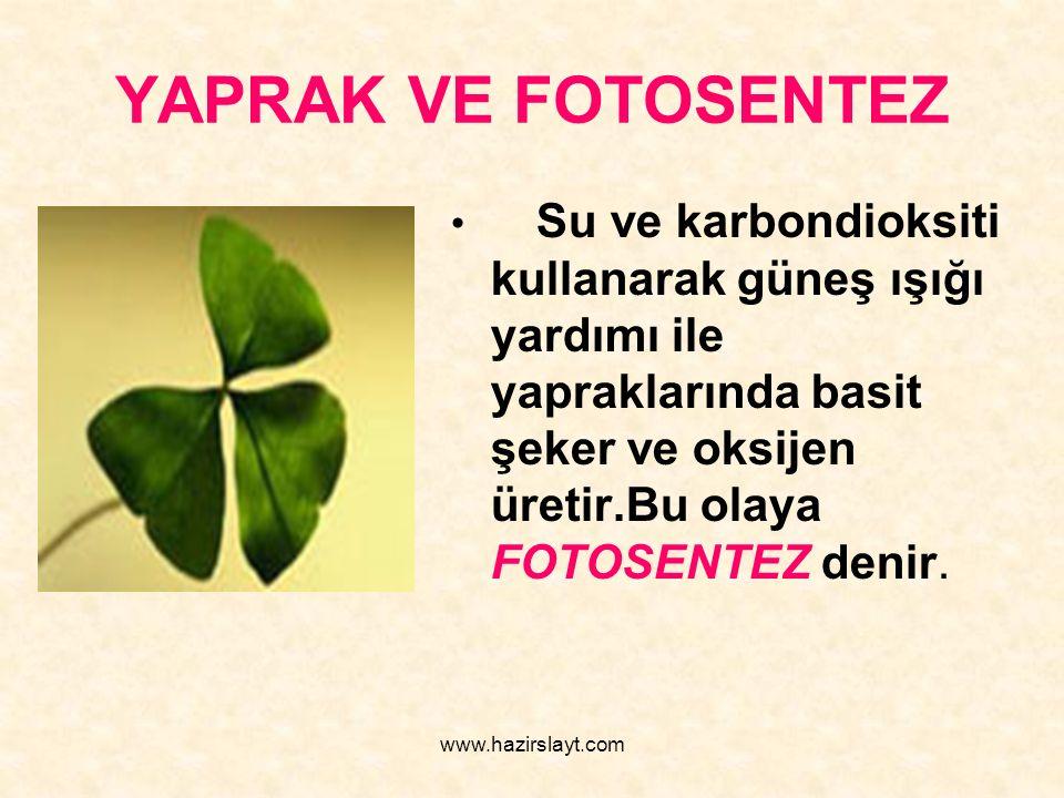 www.hazirslayt.com YAPRAK VE FOTOSENTEZ Su ve karbondioksiti kullanarak güneş ışığı yardımı ile yapraklarında basit şeker ve oksijen üretir.Bu olaya F