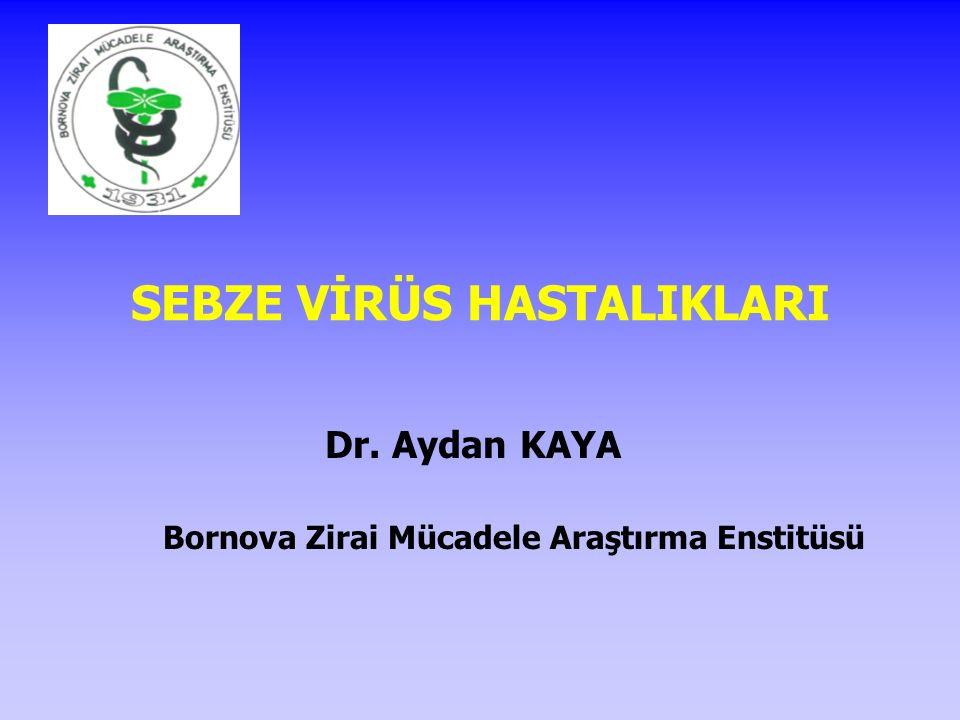 SEBZE VİRÜS HASTALIKLARI Dr. Aydan KAYA Bornova Zirai Mücadele Araştırma Enstitüsü