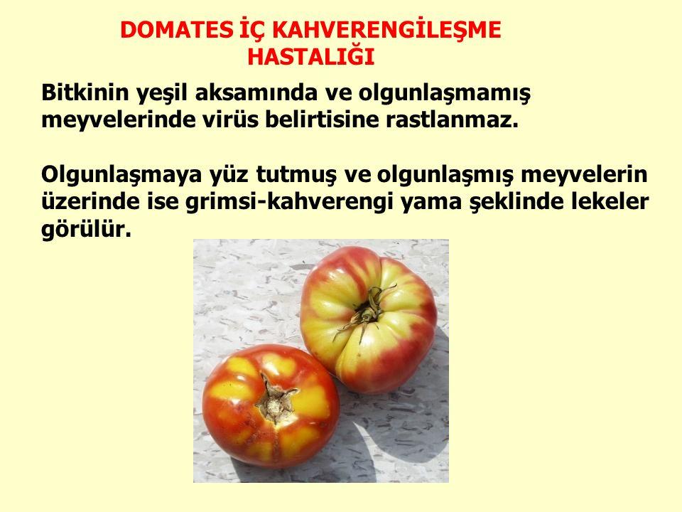 Bitkinin yeşil aksamında ve olgunlaşmamış meyvelerinde virüs belirtisine rastlanmaz.