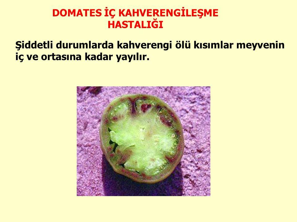 Şiddetli durumlarda kahverengi ölü kısımlar meyvenin iç ve ortasına kadar yayılır.