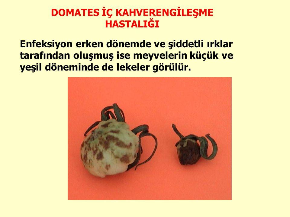 Enfeksiyon erken dönemde ve şiddetli ırklar tarafından oluşmuş ise meyvelerin küçük ve yeşil döneminde de lekeler görülür.
